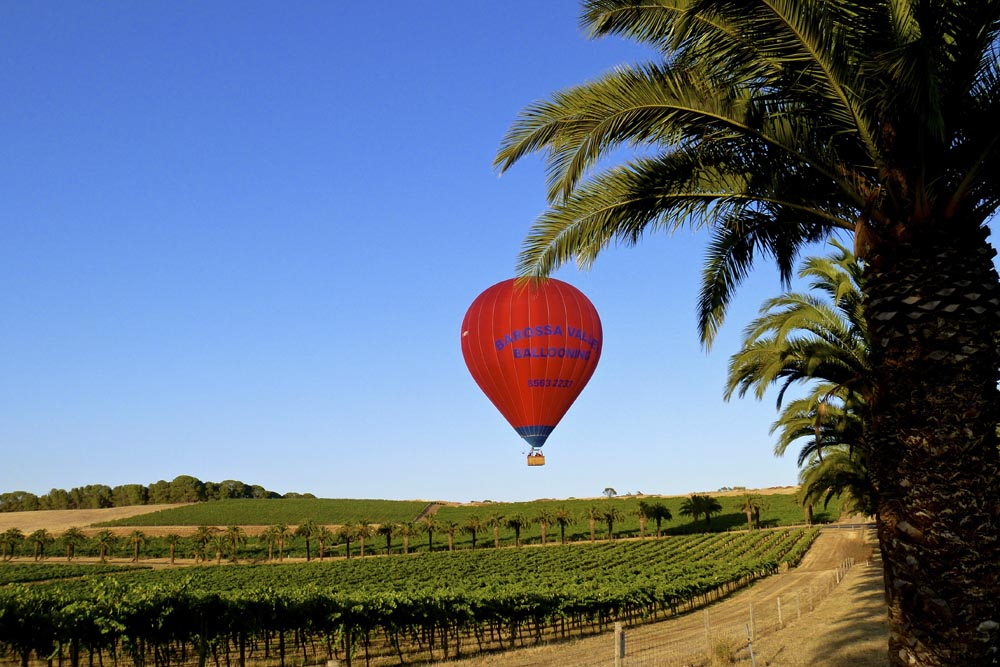 Barossa Valley Ballooning over Seppeltsfield